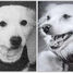 Soviet Space Dogs: Damka and Krasavka returns safe from the space